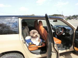 我が家は夫婦と愛犬3頭(オーストラリアン・ラブラドゥードル)|プロボックス